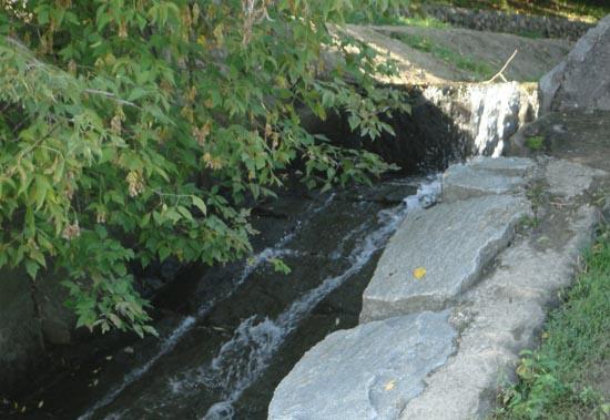 Устье ручья
